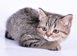 little kitten looking aside