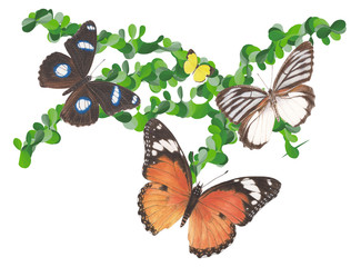 Butterfly Graphic2
