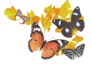 butterfly graphic1