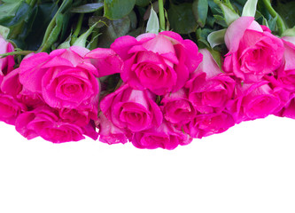 border of fresh pink roses close up