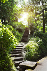 Stone stairs in park