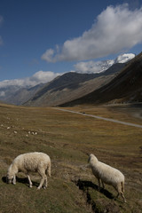 mountain landscape with sheep