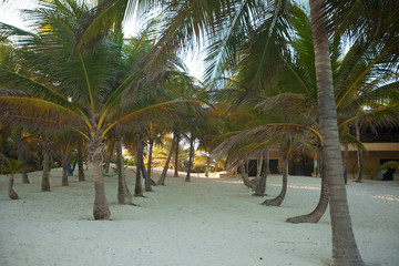 palm grove on the exotic tropical beach