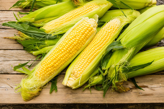 Ears of fresh yellow sweet corn