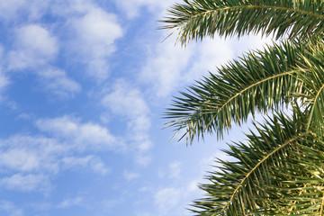 Palm leaf on the fresh blue sky