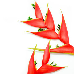 Wall Mural - heliconia