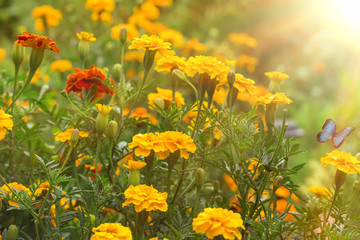Autumn flowers in garden
