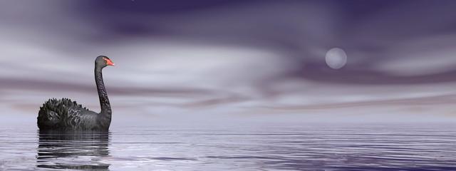 Black swan peace - 3D render