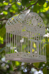 Empty bird-cage hanging from a tree