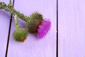 Thistle flower on wooden background