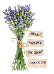 fresh lavender flowers with paper tags isolated on white