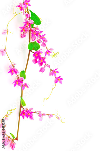 Wall mural Coral Vine