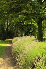 ハーブの庭