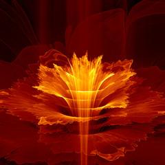 Wall Mural - Fiery fractal flower