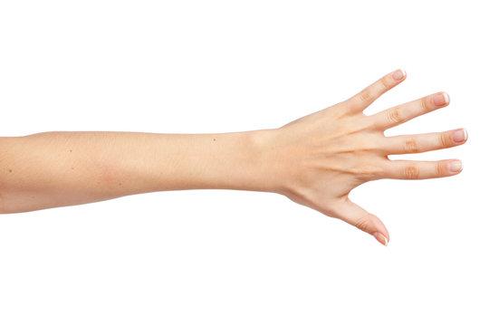 Female hand isolated on white background