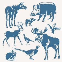 wild animals on a white background