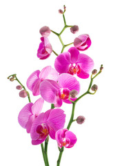 Tuinposter Orchidee pink flowers orchid on a white background