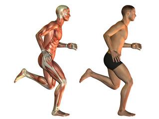 Wall Mural - Männlicher Körper beim Laufen