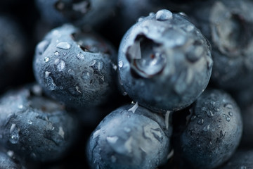 Macro shot of blueberries covered with dew drops