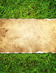 Fototapete - Green grass and paper