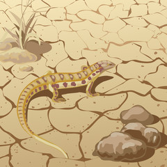 Lizard in steppe