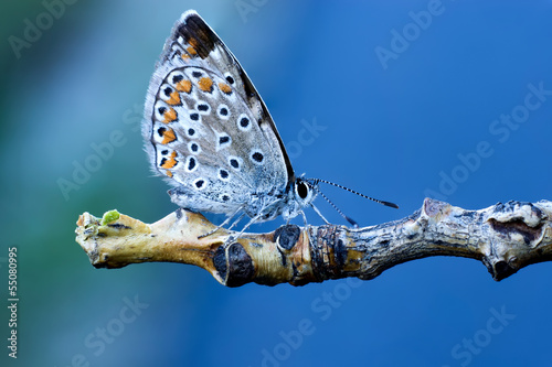 Farfalla S Sfondo Blu Cielo Stock Photo And Royalty Free Images On
