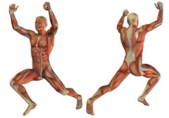 Wall Mural - Muskelstruktur beim Gewichtheber