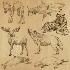 Animals around the World (part 3). Collection of hand drawings.