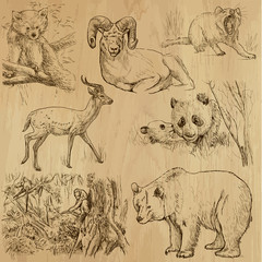 Animals around the World (part 4). Collection of hand drawings.