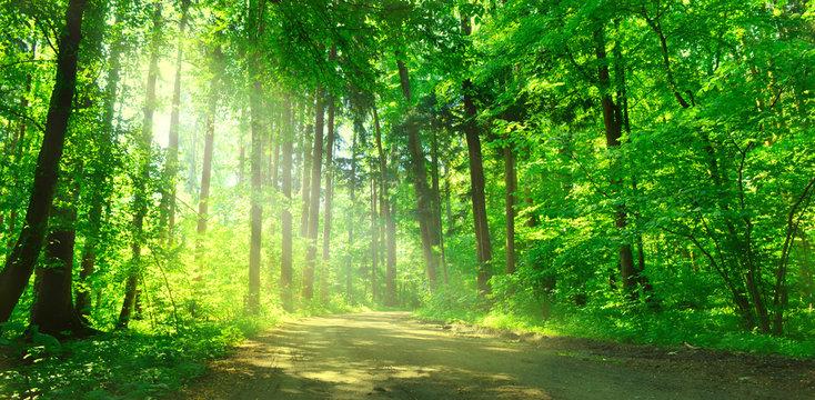 Waldweg mit Sonnenschein