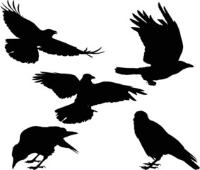 set of five crow silhouettes isolated on white