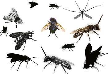 isolated dipterous insects collection