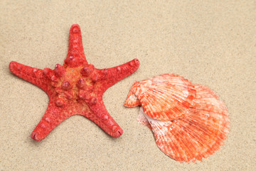 Red starfish and shell on sandy background.