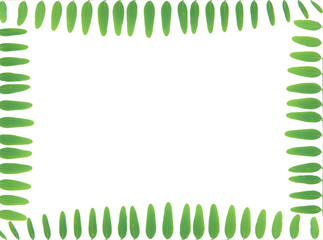 green leaves frame with white background