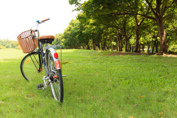Bicycles in the park