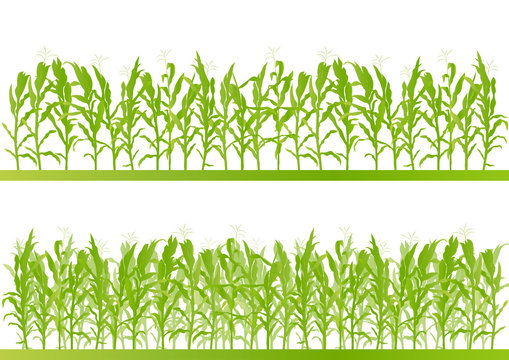 Corn field detailed countryside landscape illustration backgroun