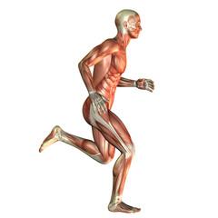 Wall Mural - Muskelaufbau Mann beim laufen