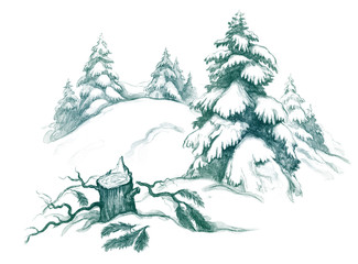 fir tree stump