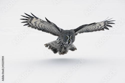 Wall mural Great-grey owl, Strix nebulosa