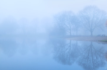 tree reflected in lake and fog
