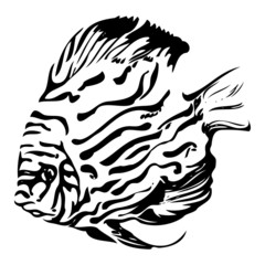 Exotic coral fish black and white vector illustration