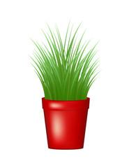 Grass in red flowerpot