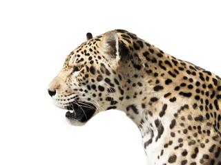 Fototapete - Predator