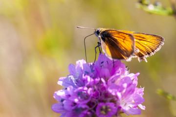 Butterfly feeding on a flower.