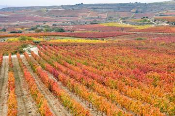 Wall Mural - Viñedos en otoño, La Rioja (España)