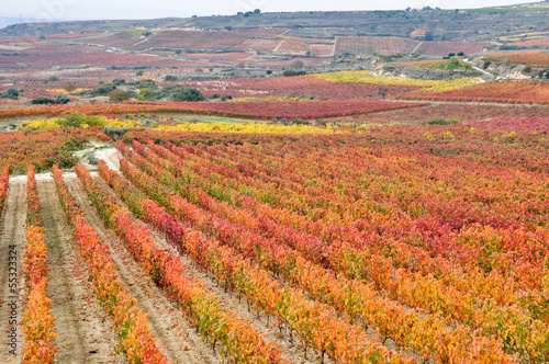 Wall mural Viñedos en otoño, La Rioja (España)