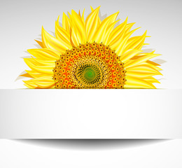 Abstract sunflower background, Vector illustration.