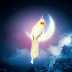 Parrot sitting on moon