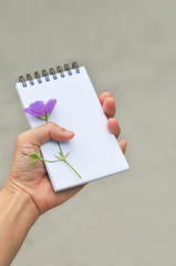 close up of hand holding blank notepad, on white background