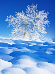 snow covered trees - winter landscape